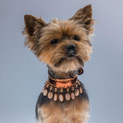 collar con complementos para perros