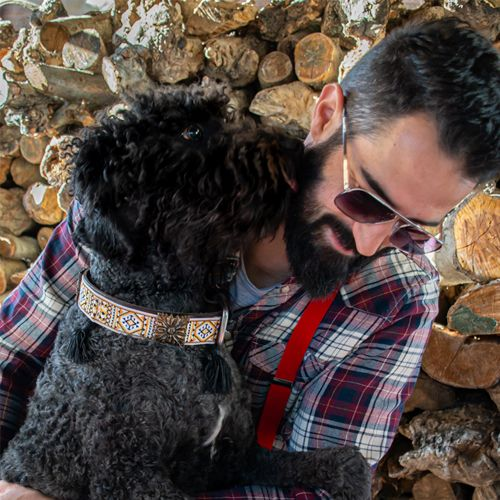 perro negro con collar