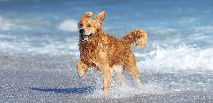 Playas para disfrutar con perros en la Región de Murcia