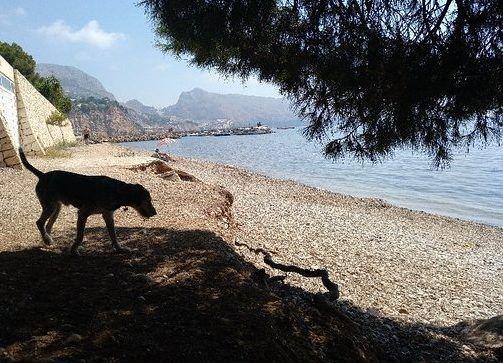 playa mar y montana altea para perros