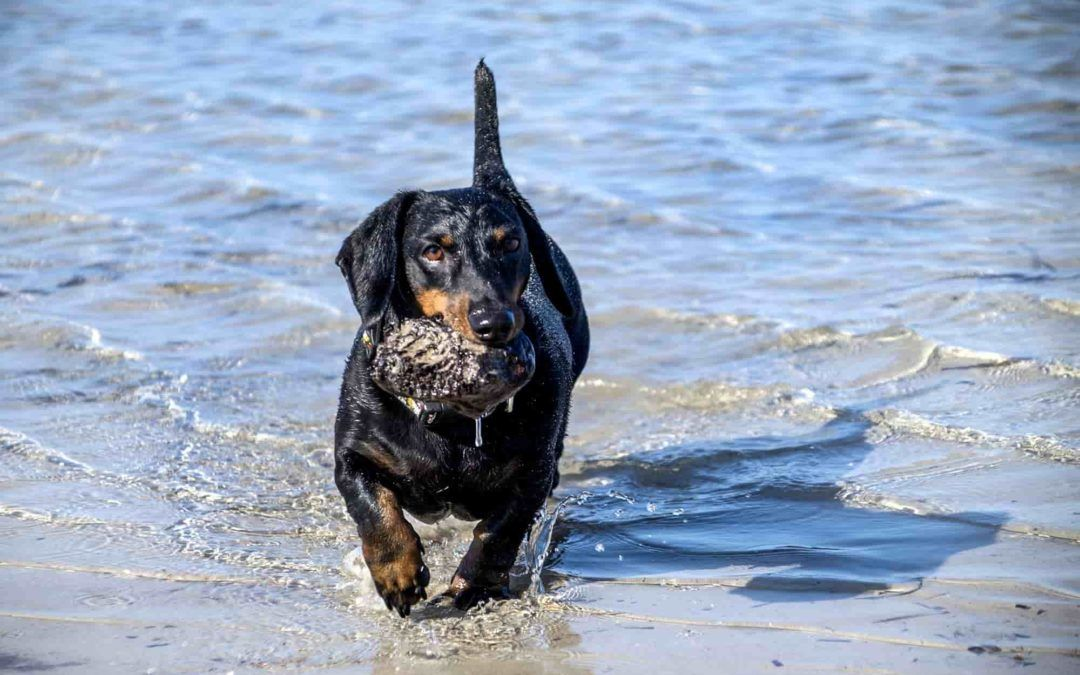 Playas para disfrutar junto a tus perros en Alicante