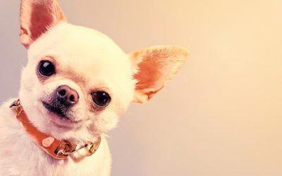 Conoce las mejores razas de perros para niños