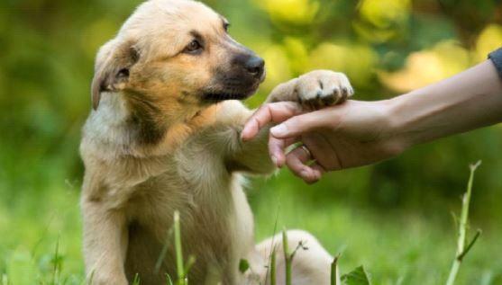 perro sin raza para niños